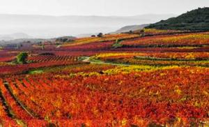 Spain Rioja